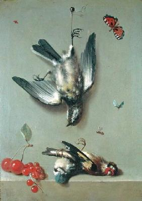 Still Life of Dead Birds and Cherries