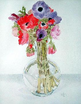 Anemonies, 1982 (coloured pencil on paper)