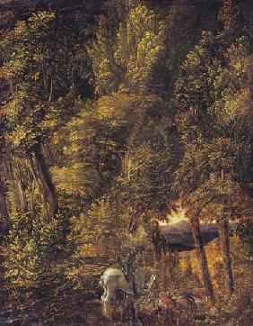 Woodland landscape with piece of Georges Drachenkampf