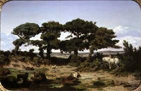 The Oaks of Kertregonnec