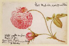 Album sheet with a rose