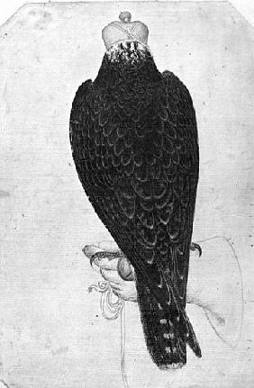 Hawk on hand, seen from behind, from the The Vallardi Album