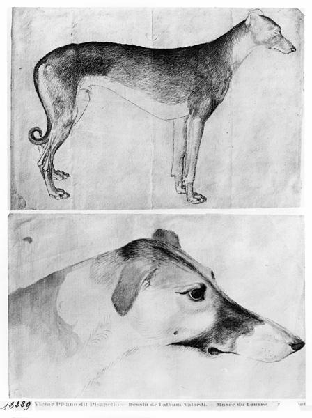 Greyhound and head of a greyhound, from the The Vallardi Album