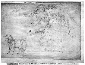 Ram and head of a ram, from the The Vallardi Album