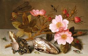 Still life depicting flowers, shells and a dragonfly (oil on copper) (for pair see 251377)