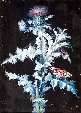 Still Life of a Thistle (gouache)