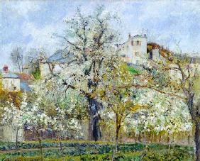 The Vegetable Garden with Trees in Blossom, Spring, Pontoise