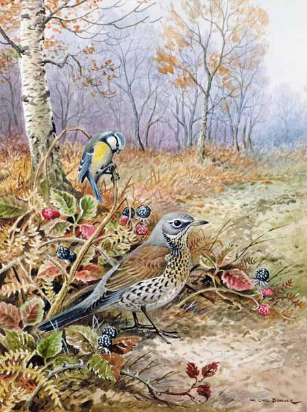 Fieldfare and Blue Tit