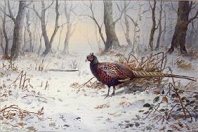 Pheasants in Snow (w/c)