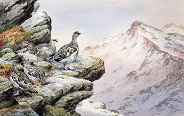Ptarmigan on the High Tops