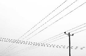 Power Lines, Wiltshire