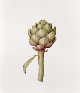 Artichoke, 1999 (pencil on paper)