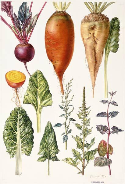 Beetroot and other vegetables (w/c)