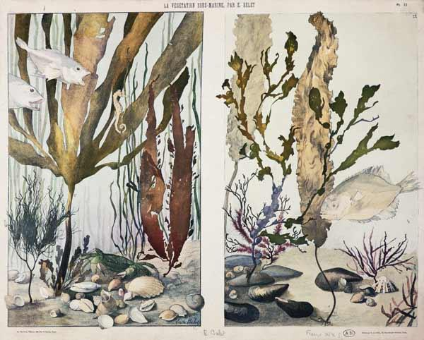 Seaweed, fishes, sea horse, crab and shellfish, illustrated plates from 'La Vie sous marine'