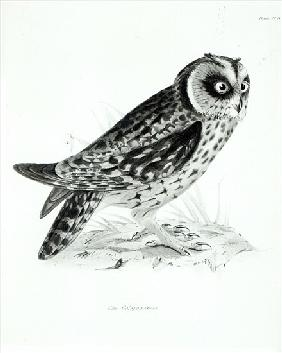 Owl, plate 3 from ''The Zoology of the Voyage of H.M.S Beagle, 1832-36'' Charles Darwin