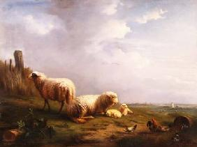 Sheep and chickens in a landscape