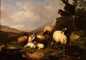 Sheep in a Landscape