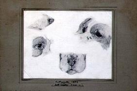 Studies of the Artist's Dog