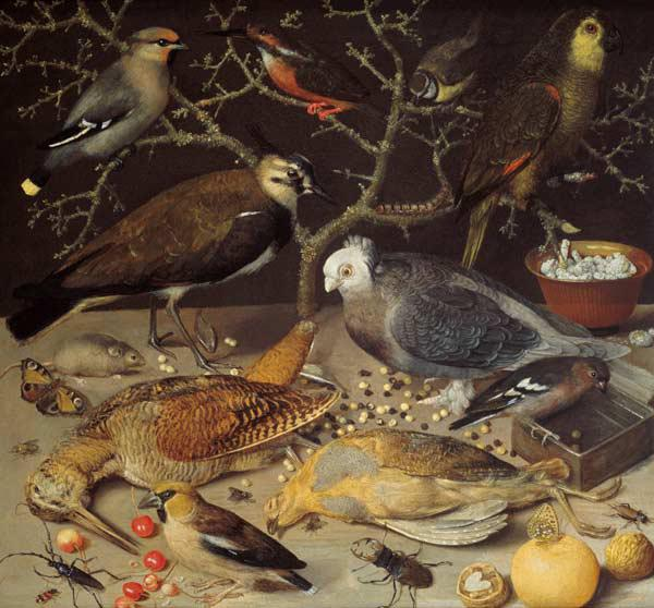 Still Life of Birds and Insects