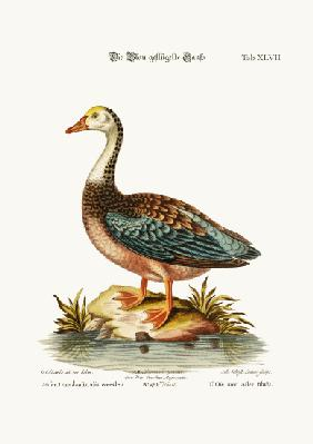 The Blue-Winged Goose
