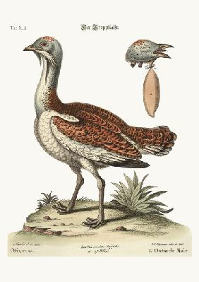 The Bustard Cock