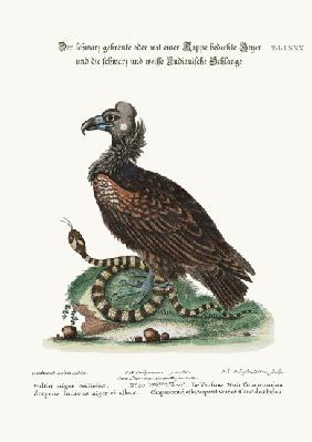 The Crested or Coped Black Vulture, and the Black and White Indian Snake