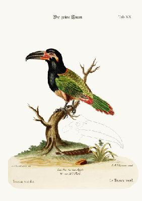 The Green Toucan