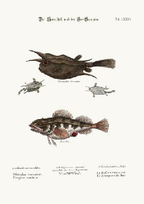 The Horned Fish, and the Sea Scorpion
