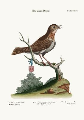 The Little Thrush