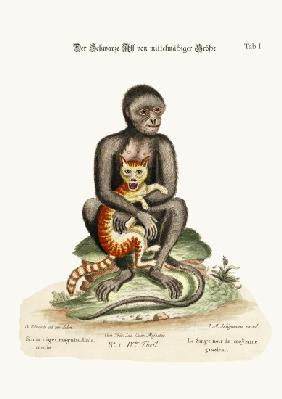 The Middle-sized Black Monkey