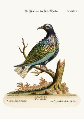 The Pigeon from the Isle of Nicobar