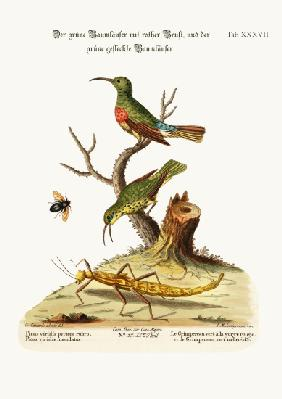 The Red-breasted Green Creeper, and the Spotted Green Creeper
