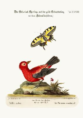 The Scarlet Sparrow and the Yellow Swallow-tailed Butterfly
