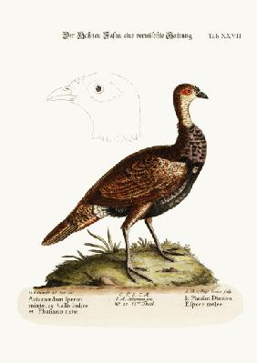 The Turkey-Pheasant, a mixed Species
