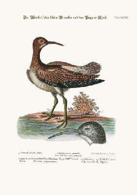 The Whimbrel, or Lesser Curlew, and the Paper-Moss