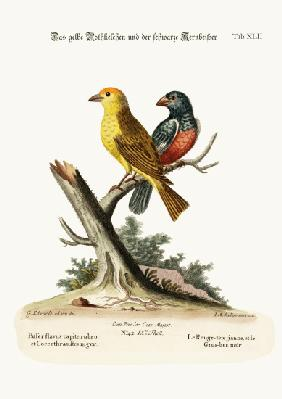 The Yellow Red-pole, and the Black Gros-beak