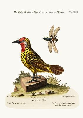 The Yellow Woodpecker with Black Spots