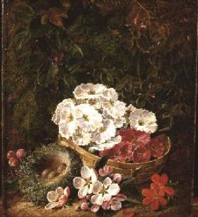 Still Life with Bird's Nest and Primulas