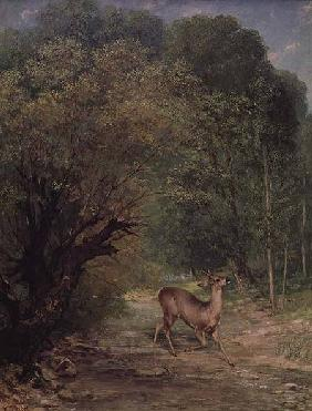 The Hunted Roe-Deer on the alert, Spring
