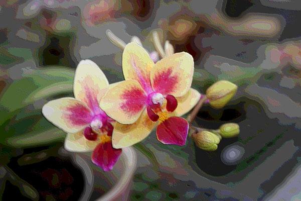 Orchidee 0048 harald albrecht for Quadri moderni orchidee