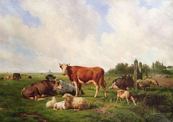 Sheep and Cattle in a Field