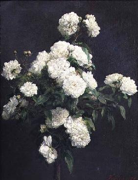 Still Life of White Peonies