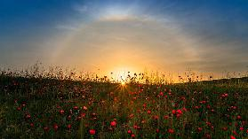 Red poppies and sunrise
