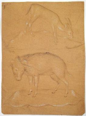 Study of a goat and a boar