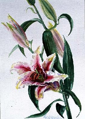 Lily, 1998 (w/c on paper) (see also 124443 & 124444)