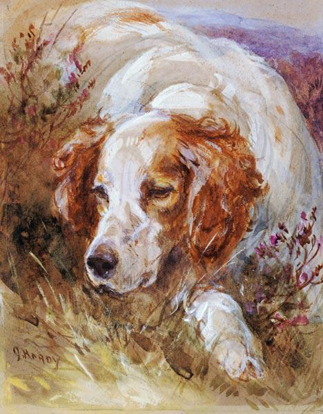 A Spaniel (w/c and bodycolour on paper)