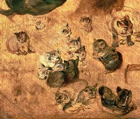 Study of cats, 1616 (detail of 65879)