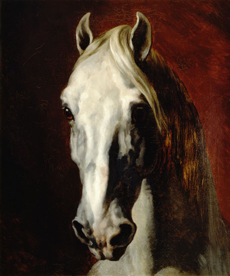 Testa di cavallo bianco - olio su tela di Jean Louis Théodore ...