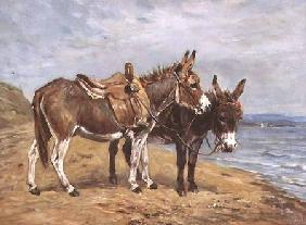 Seaside Donkeys