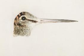 Woodcock, from The Farnley Book of Birds, c.1816 (pencil and w/c on paper)